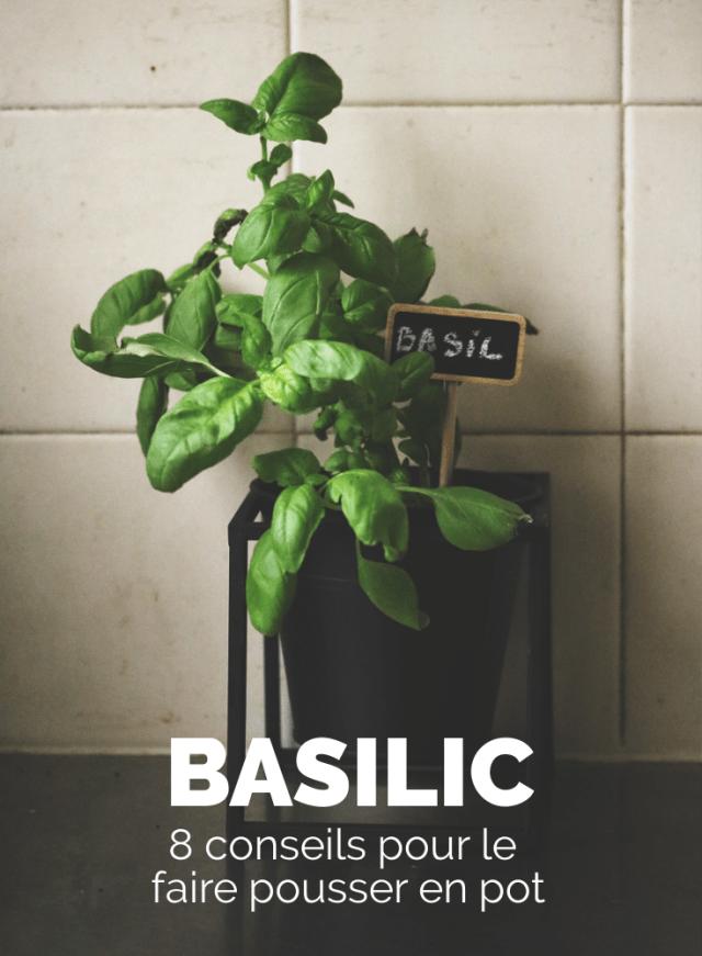 faire pousser du basilic en pot. herbe aromatique facile cultiver dans un pot noir sostrene grene