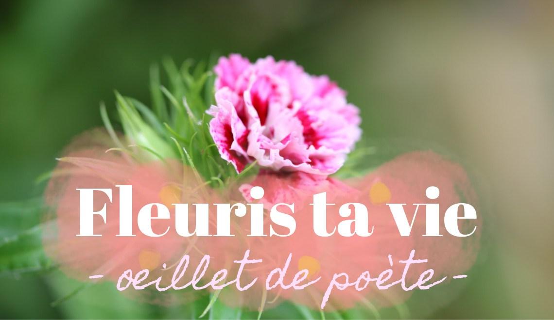 fleuris ta vie - oeillet de poète : conseille de Sophie, fleuriste éco-responsable pour consommer des fleurs locales français en bouquet