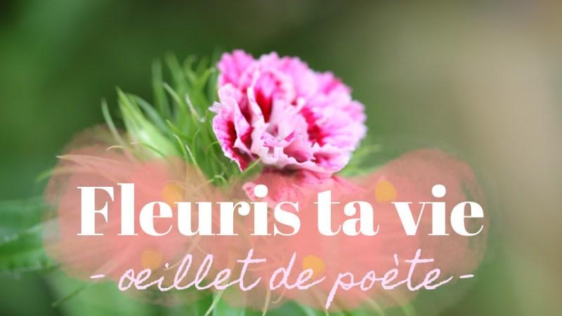 Oeillet de poète en bouquet (mariage et composition)
