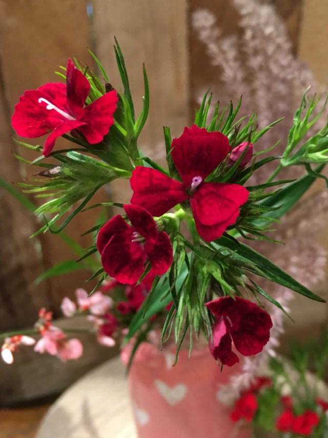 fleurs françaises et de saison d'oeillets de poète rouges dans un vase rose clair