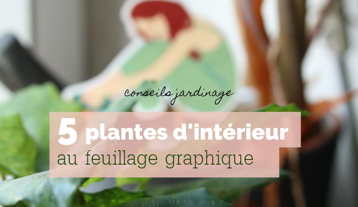 5 plantes d'intérieur au feuillage graphique