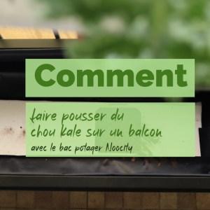 À quelle saison cultiver du chou kale en pot ?