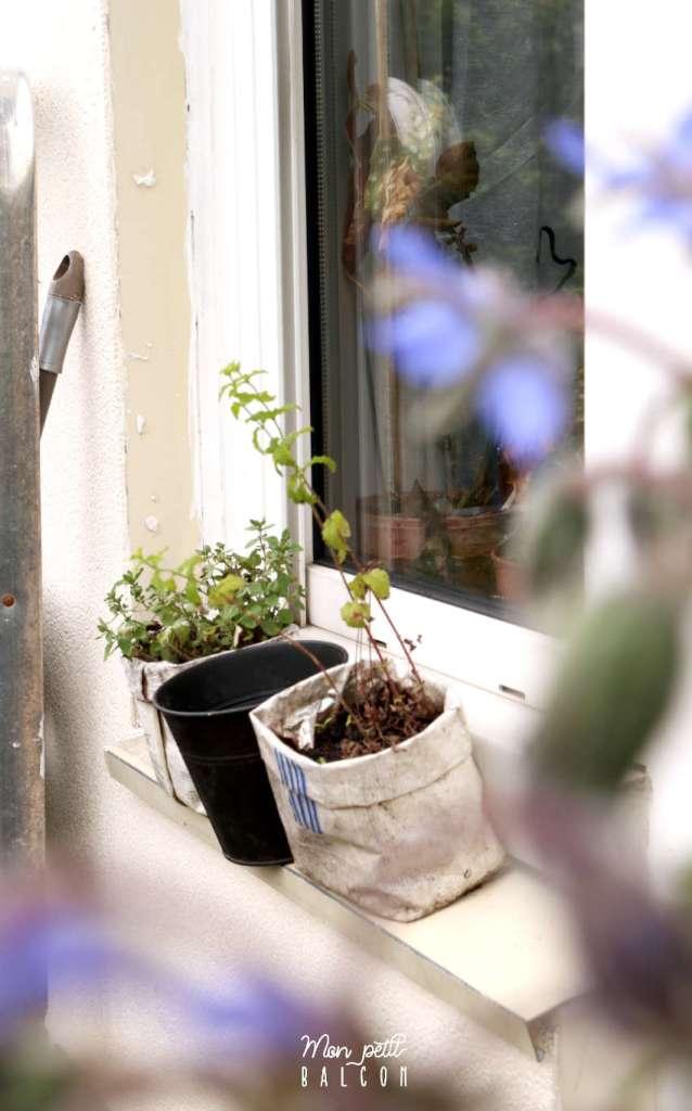 plante de menthe ananas, thym et origan commu sur rebord de fenêtre balcon sans un sac à café