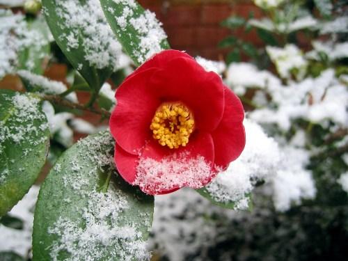 protéger ses plantes l'hiver