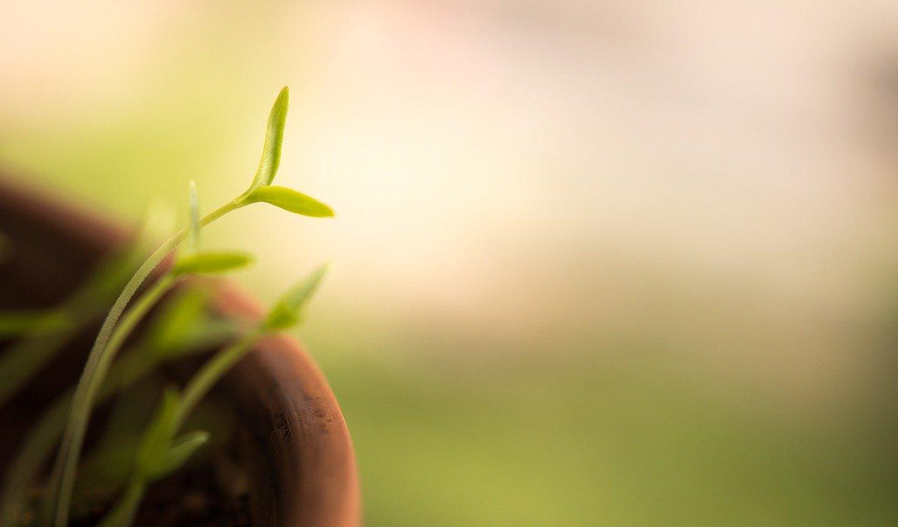 Plantes en pot extérieur: gel, insectes, de l'observation aux soins