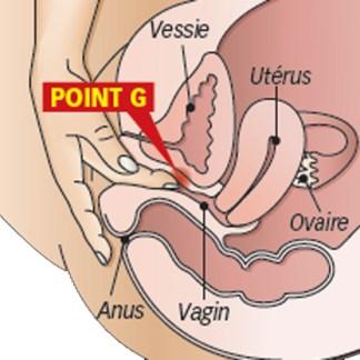 Vibrateurs point G