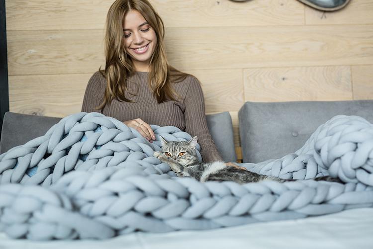 ohhio blanket cat bis