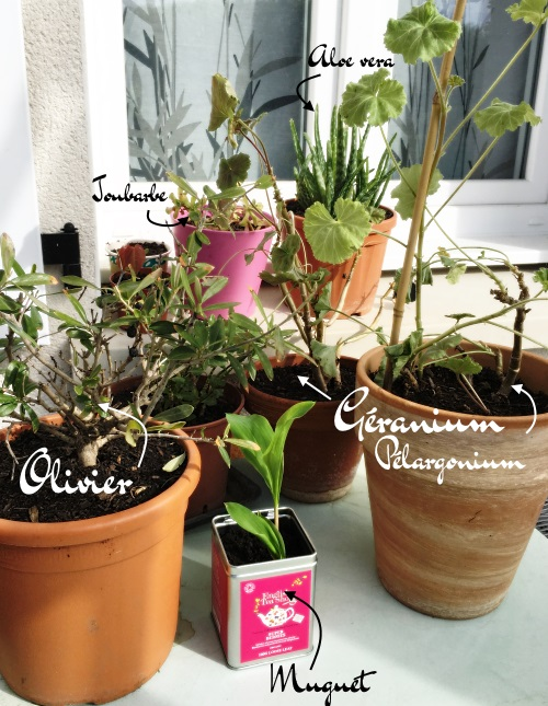 petites plantes du jardin