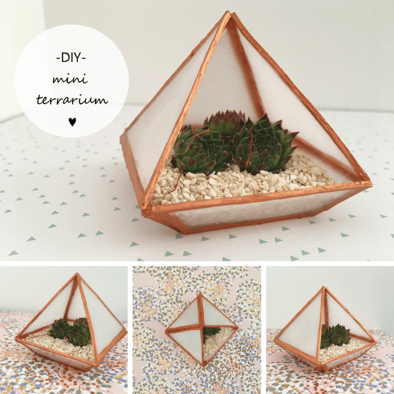 diy mini terrarium plastique dingue
