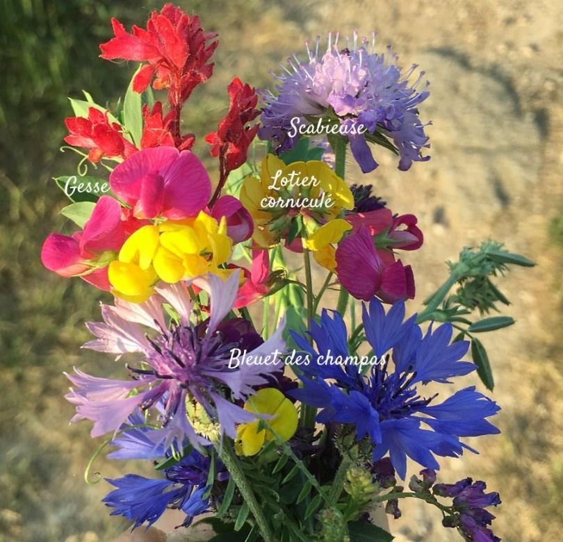 bouquet de fleurs des champs + noms