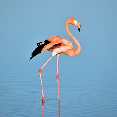 Pour les flamingos lovers ♥