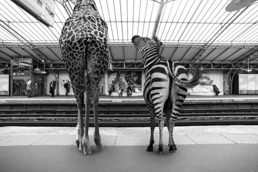 © Thomas Subtil et Clarisse Rebotier