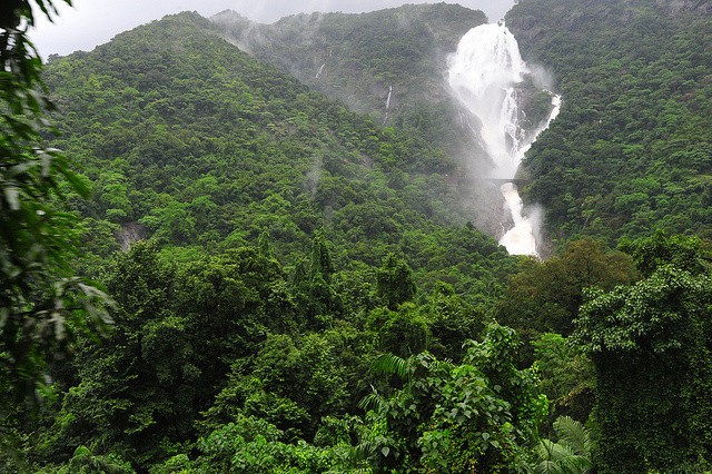 Monsoonal Goa