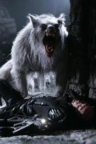 William roars!