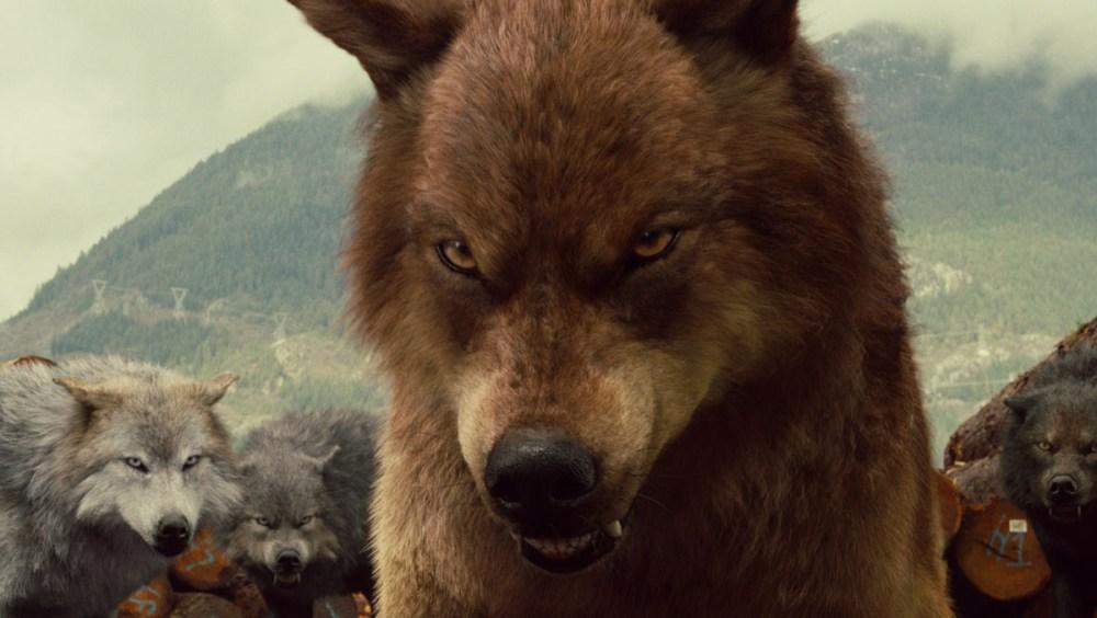 wolf-hot-twilight-fight