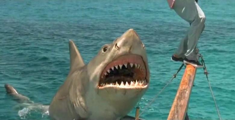 Squalo 4 primo piano squalo