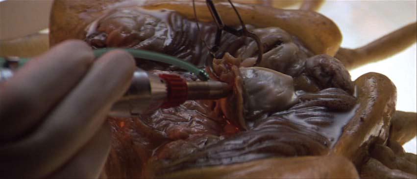 Alien autopsia del Facehugger