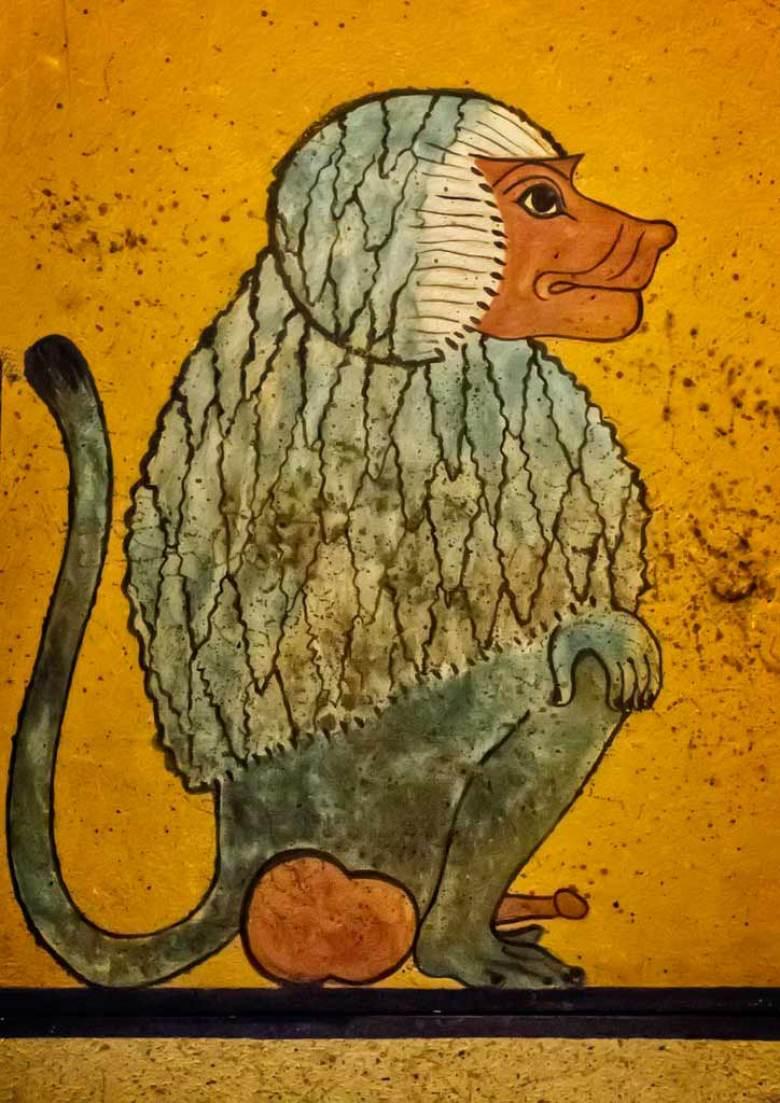Babi babbuino egitto pittura