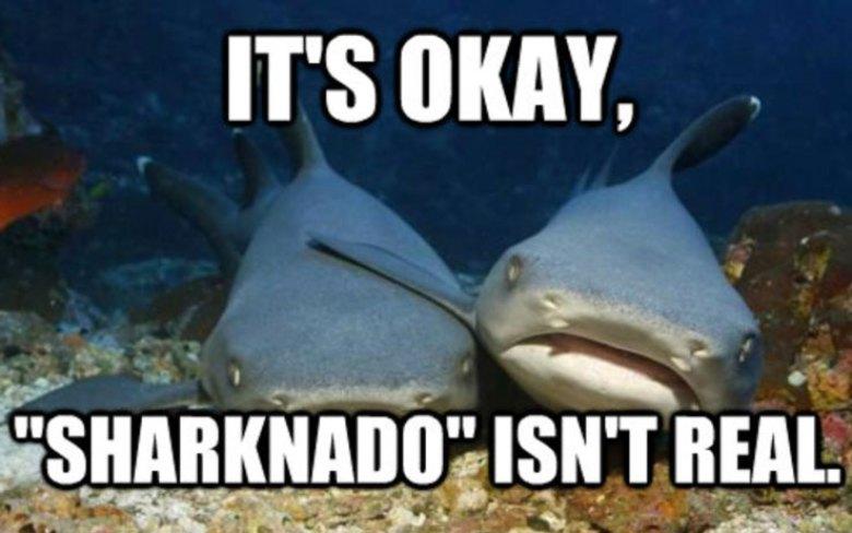 Sharknado squali meme