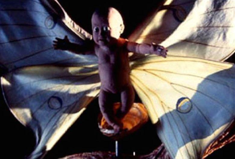 bambino farfalla la mosca