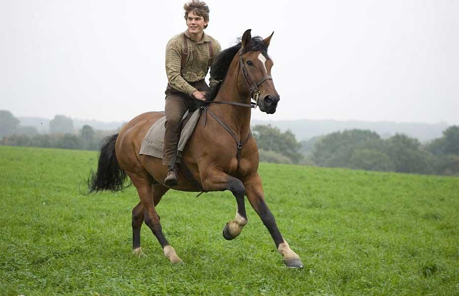 Joey cavallo di Warhorse