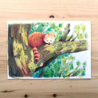 Sleepy red panda print
