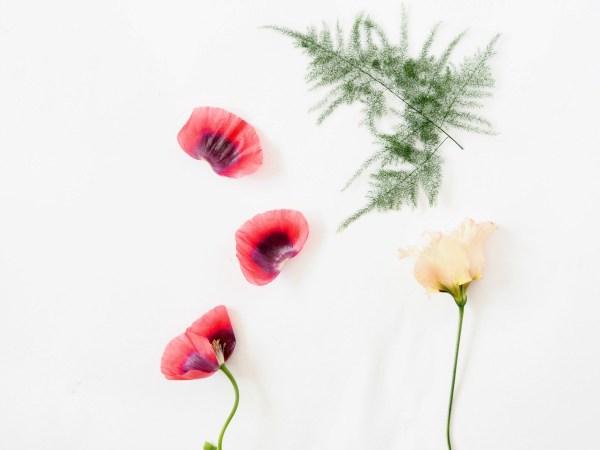Diy Floral Suncatchers Make Instantly Pressed Flower Decor For Your