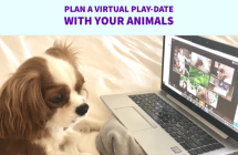 Animal play-dates