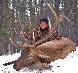 6x6 Bull Elk - 310 B&C