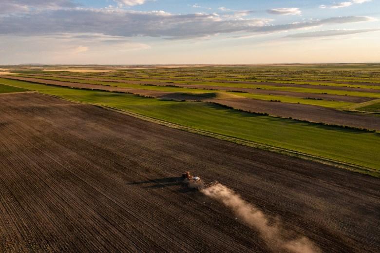 Wicks Tiber Ridge Farm Montana regenerative agriculture