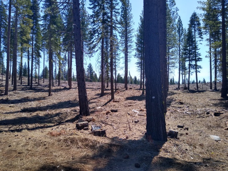forest thinning treatment Dixie Fire wildfire