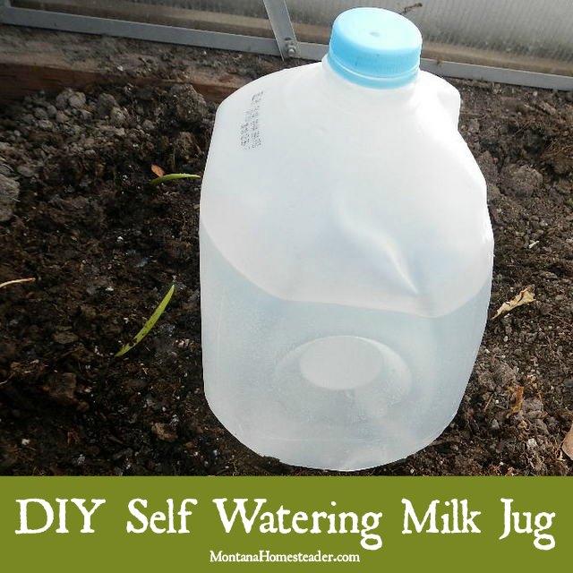DIY Self Watering Milk Jug Montana Homesteader