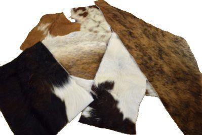 hair on scrap, hair on cow, hair on cow scrap