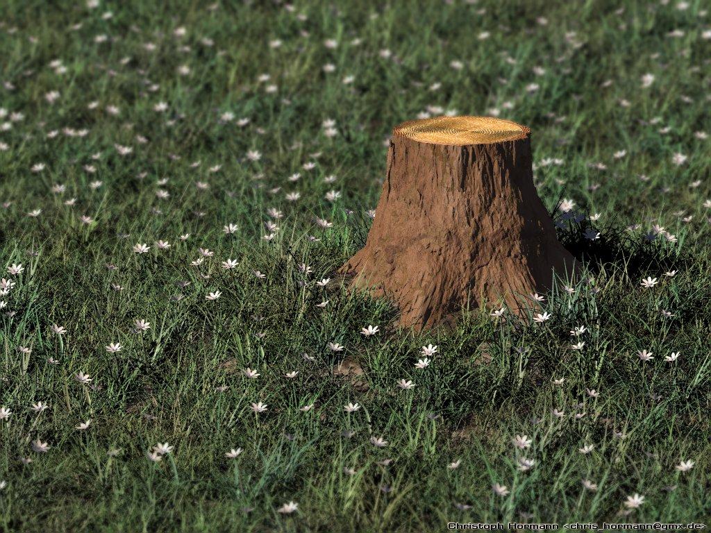 Stump Mushrooms  Montana Mushrooms