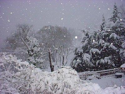 neve-alpi-nevicate-anche-abbondanti-con-fiocchi-fin-sotto-i-1000-metri