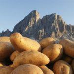Kartoffelwoche - Settimana di Patate - Potato Week