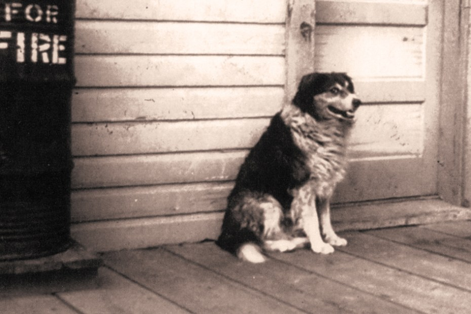 She the loyal dog of Fort Benton