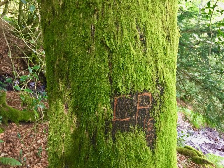 Misteriosa inscripción tallada en un tronco.