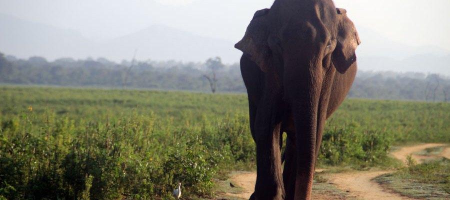 ¿Safaris en Asia? ¡Chúpate esa Africa!
