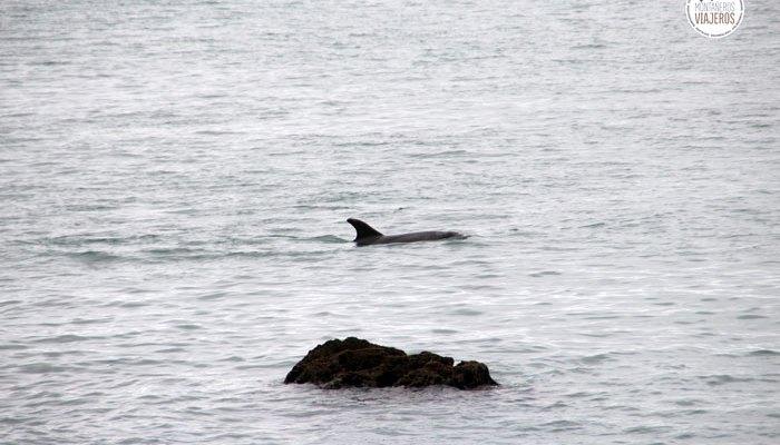 Como nadar con delfines en libertad por libre y gratis en Nueva Zelanda