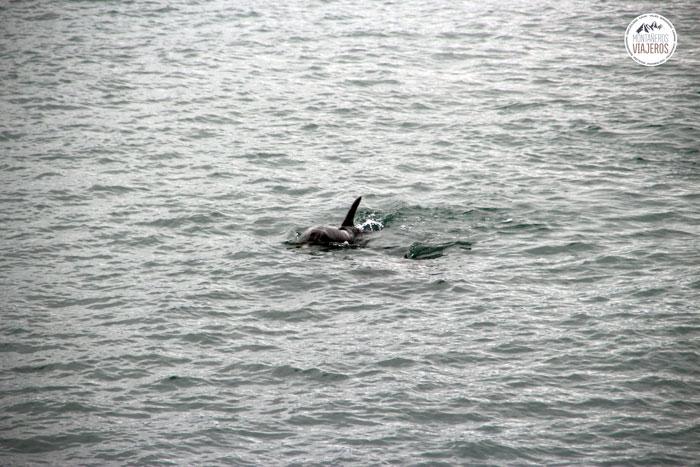 nadar-delfines-gratis-libre-nueva-zelanda