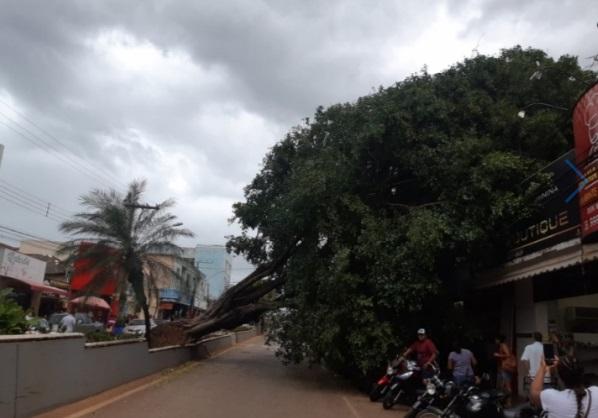 Árvore cai no centro da cidade e deixa avenida interditada em Paracatu