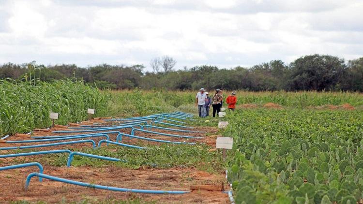Famílias da zona rural de Lagoa Grande terão apoio para desenvolver projetos