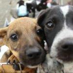 Como montar uma ONG de animais: Tudo que você precisa saber!