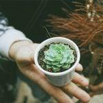 Como ganhar dinheiro com suculentas: Aprenda agora!