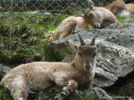 Le Parc de Merlet in Les Houches © montblancfamilyfun