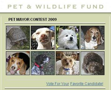 Pet Mayor Contest 2009