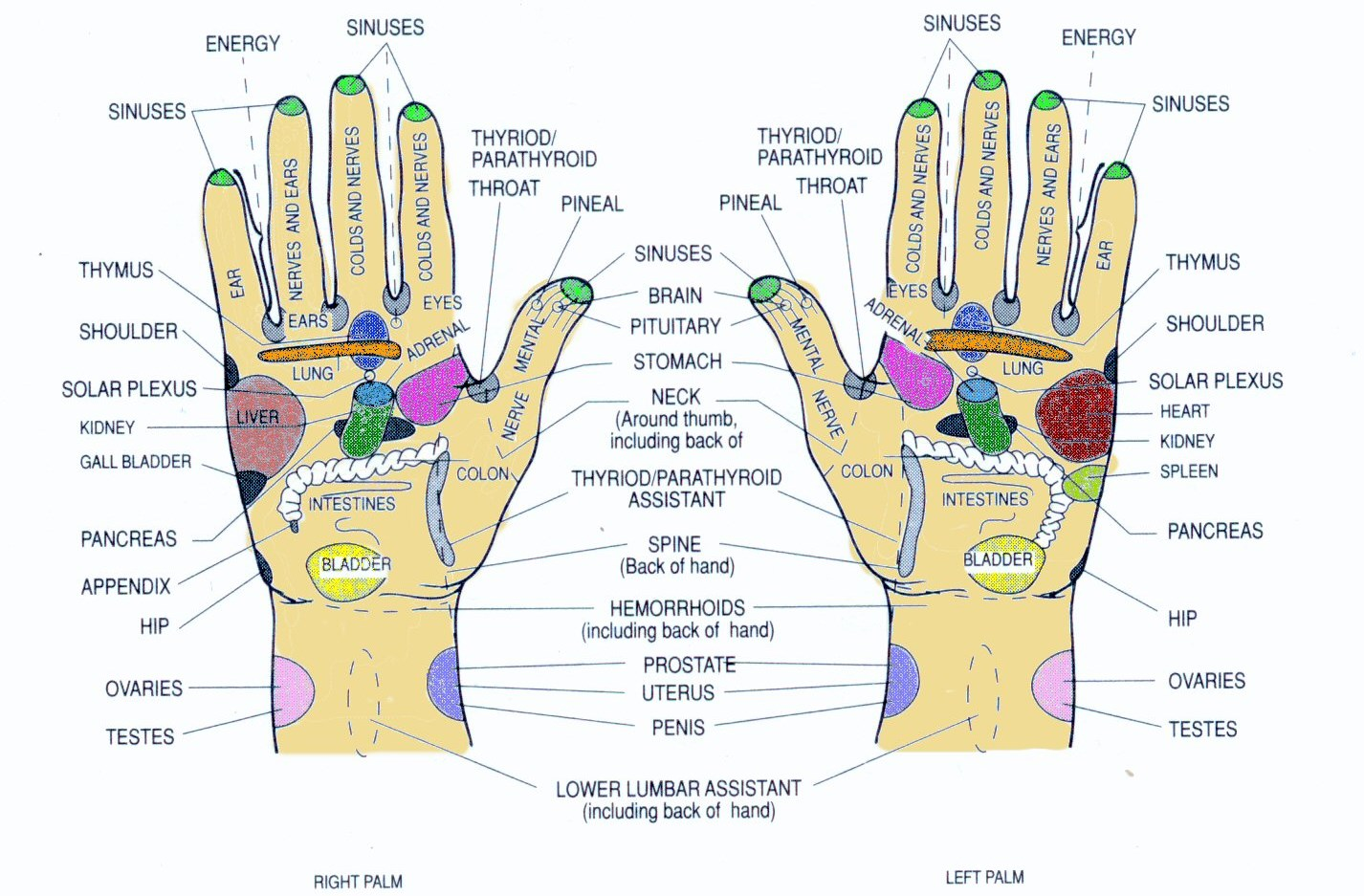 top of foot pain diagram 3 way lighting wiring uk october 2013 monterey bay holistic alliance