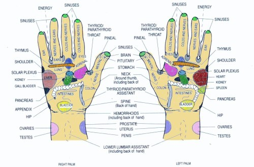small resolution of hand reflexology meridians