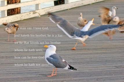 xp3-dot-us_DSC_3841 shouting seagull